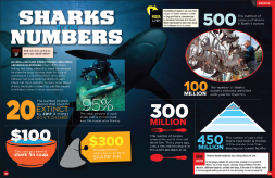 SHARKS NUMBERS